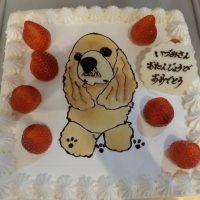 あんこケーキ